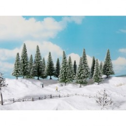 Noch 24683 : Sneeuwsparren