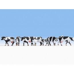Noch 15725 : Cows black-white