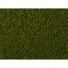 Noch 07270 : Foliage