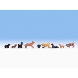 Noch 15719 : Honden