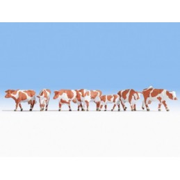 Noch 15726 : Cows brown-white